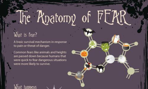 Cate ceva despre anatomia fricii